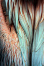Free Structure Of Plumage Stock Image - 6294371