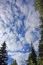 Free Tree Sky Shot Royalty Free Stock Photography - 6296837