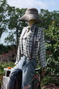 Free Scarecrow Royalty Free Stock Photos - 6299568