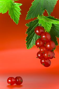 Free Red Currant Stock Image - 6290531