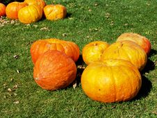 Free Pumpkins Stock Images - 6290574