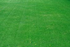 Free Beautiful Green Grass Stock Photo - 6290810