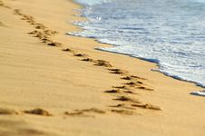 Free Footprints On Beach Stock Image - 6290981