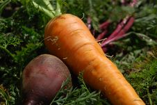 Free Vegetables Against Stock Images - 6291054