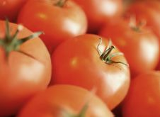 The Group Of Tomatoes Stock Image