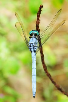 Free Dragonfly Royalty Free Stock Image - 6291836