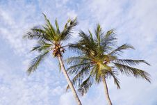 Free Two Coconut Palms Stock Image - 6294271