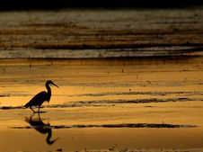 Free Egret In Sunset Royalty Free Stock Photo - 6294585