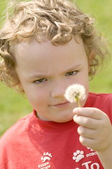 Free Blowing Dandelion Stock Photography - 6294602