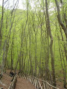 Free Woods Royalty Free Stock Image - 6294656