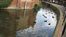 Free Ducks In Town River Royalty Free Stock Photo - 6295095