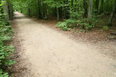 Free Path In A Forest Royalty Free Stock Photography - 6295527