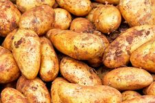 Free Potatoes With Dirt Stock Images - 6296124