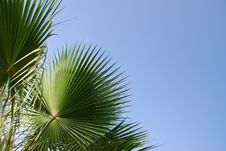 Free Tropical Summer Stock Photo - 6296750