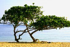 Free Tropical Trees On A Sandy Beach Stock Images - 6297174