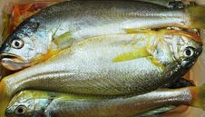 Free Fish Royalty Free Stock Photography - 6297537