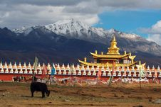 Free Tibet Stock Photos - 6297893