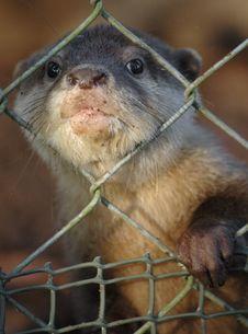 Free Otter Stock Photos - 6298283
