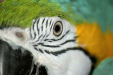 Free Macaw Eye Stock Photos - 6298343