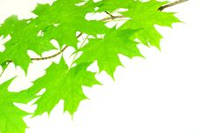 Free Green Leaves Stock Photography - 6299562