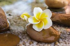 Free Plumeria Or Frangipani Decorated On Water And Pebble Rock In Zen Style Royalty Free Stock Photography - 62955797