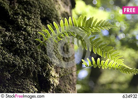 Free Fern Fronds Stock Photography - 634932