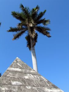 Free Palm And Pyramid Stock Photo - 630370