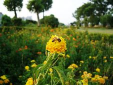 Free Bee And Flowers Stock Photos - 631323