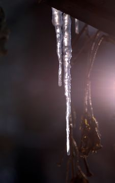 Free Spring Icicles Royalty Free Stock Photography - 631457