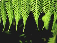 Free Fern Royalty Free Stock Image - 632286