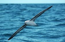 Free Seagull Flying To Nowhere Stock Image - 632351