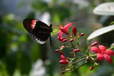 Free Butterfly On Flower Stock Images - 633664
