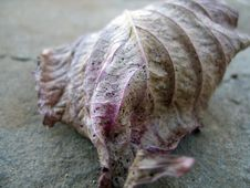 Free Fallen Leaf Stock Photography - 633682