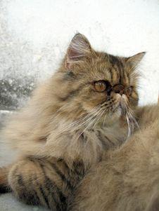 Free Cat Portrait Stock Photography - 633712