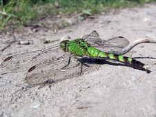 Free Green Dragonfly Royalty Free Stock Image - 633716