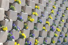 Free Pansies In The Wall Royalty Free Stock Photos - 635098