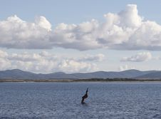 Free Sardinia Stock Photography - 636132