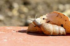 Free Curious Slug Royalty Free Stock Images - 636949