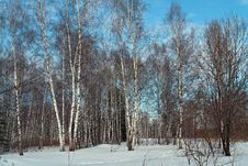 Free Spring Wood. Stock Image - 637121