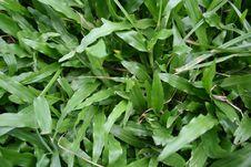 Free Grassy Patch Stock Photo - 637190