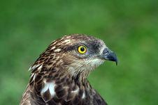 Free Eagle Stock Photo - 637370