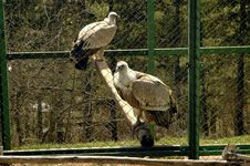 Free Eagles In A Cage Royalty Free Stock Photos - 637608
