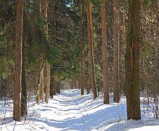 Free Pine Wood. Royalty Free Stock Photo - 637715