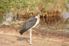 Free Heron In Tanzania. Royalty Free Stock Images - 637719