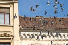 Free Pigeons Over The Citz Royalty Free Stock Photo - 637795