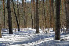 Free Pine Wood. Royalty Free Stock Photos - 637808