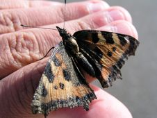 Free Butterfly On My Hand Stock Images - 638124