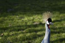 Free Crested Crane Stock Images - 638614