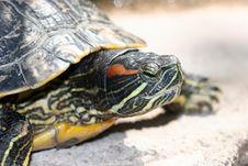 Free Turtle Stock Photos - 638843