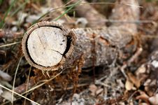 Isolated Log Royalty Free Stock Photography